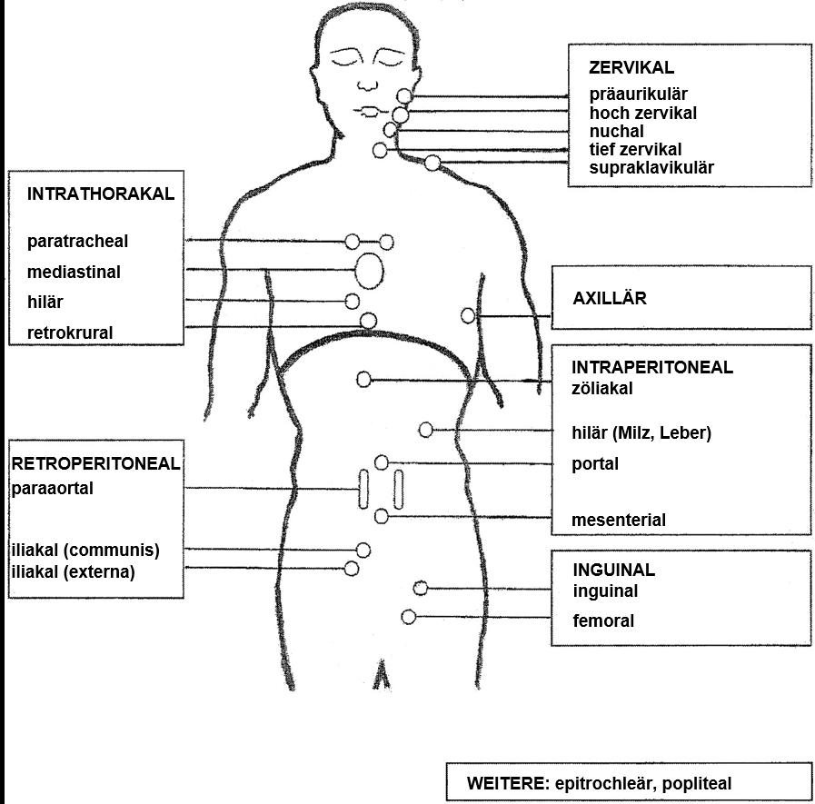 Lymphknotenregionen